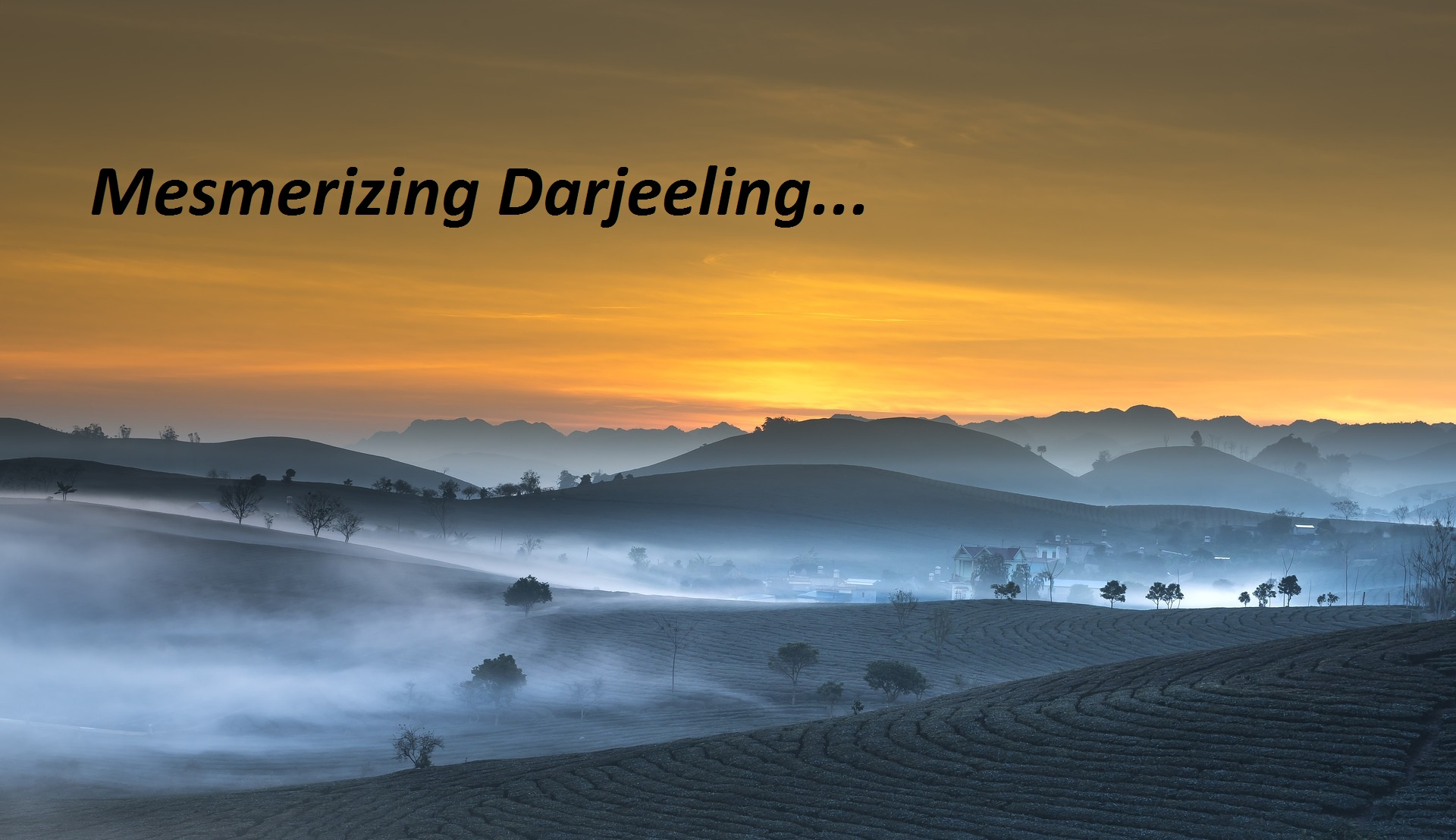 Darjeelings Packages