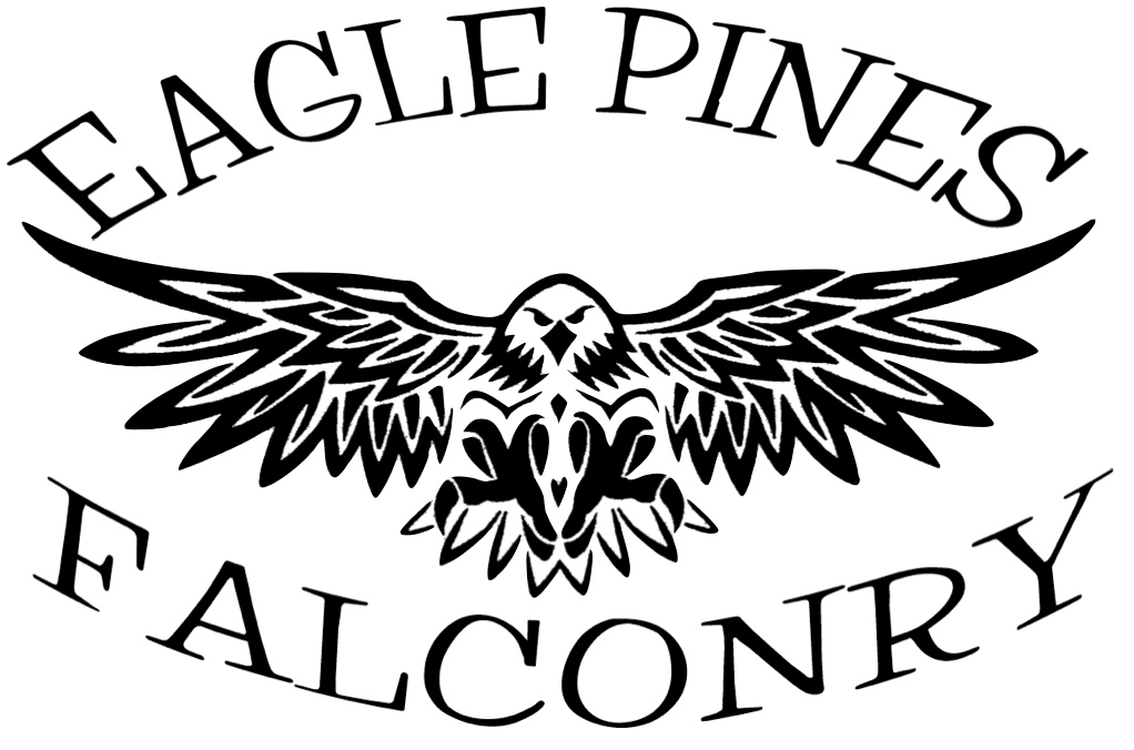 Welcome to Eagle Pines Falconry and Raptor Rescue