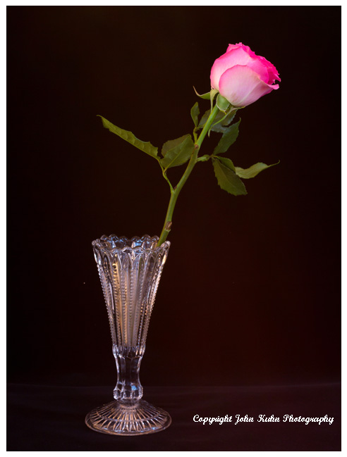 Pink Rose Vace Black Background