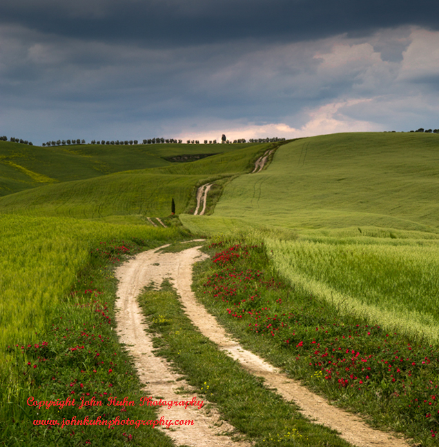 Tuscan Country Lane and Poppies
