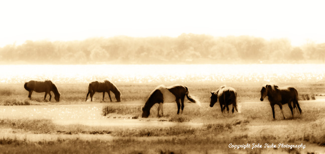 """Five Wild Ponies""  Assateague Island VA"